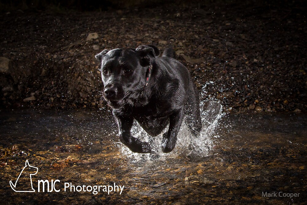 Lab with a Splash by Mark Cooper