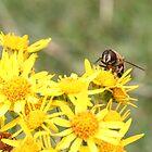 Busy Bee by Fairoak