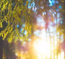 Forest Colors by dennisdasfoto