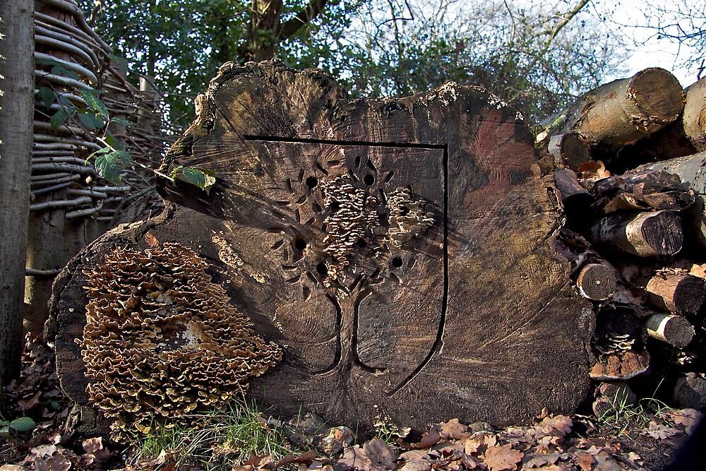 Tree Fungi by John Thurgood