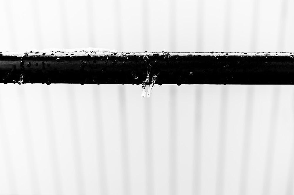 Icicles by dennisdasfoto