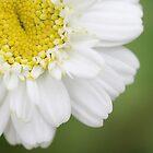 Flower by Fairoak