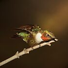 hummer in the spotlight by Randy & Kay Branham