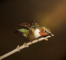hummer in the spotlight by Randy Branham