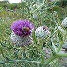Bee and thistle by elsiebarge