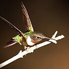 HUMMER IN THE LIME LIGHT by Randy & Kay Branham