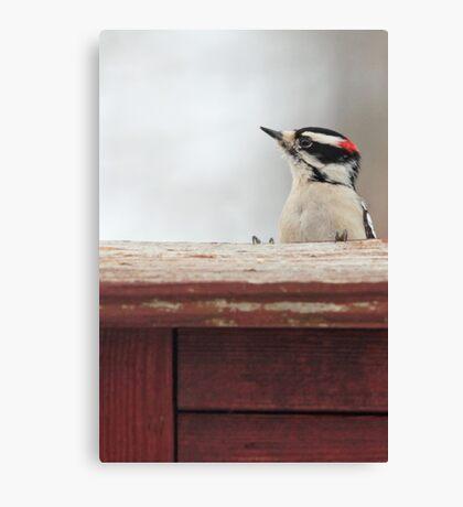 Hairy Woodpecker ~ Canvas Print