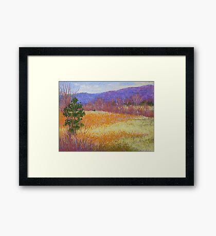 Dry grass in February Framed Print