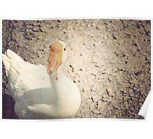 Quack!  Poster