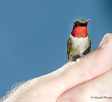 TRUST HUMMER ON MY THUMB by Randy Branham