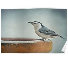 White-Breasted Nuthatch ~ Poster