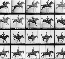 Man and Horse jumping, from 'Animals in Motion' by Bridgeman Art Library
