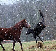 Kicking Up A Snow Storm by BerryvineImage