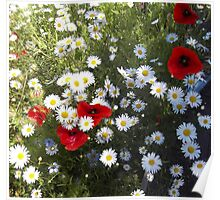 Poppies and Daisies on Red Poster
