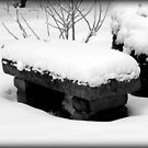 Freshly Fallen Snow © by Dawn M. Becker