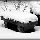 Freshly Fallen Snow © by Dawn Becker