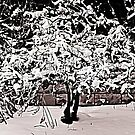 Snow Tree © by Dawn M. Becker