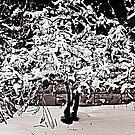 Snow Tree © by Dawn M. Becker