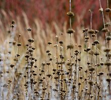 Winter Seedheads by Lucy Hollis
