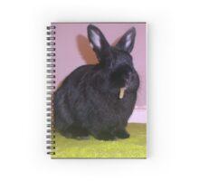 Netherland Dwarf Spiral Notebook