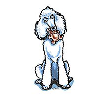 White Standard Poodle Teddy Bear Photographic Print