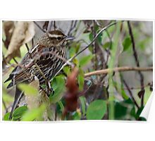 Brown Bird in Tree Poster