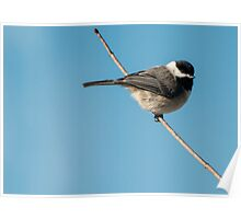 Cold Little Chickadee Poster