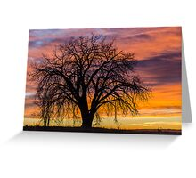 Cotton Wood Sunrise Greeting Card