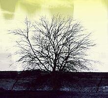 Sun Shone Through  by sinaprax