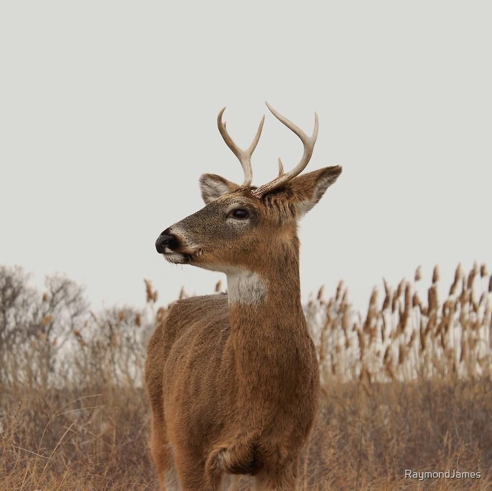 Beautiful Deer Profile by RaymondJames