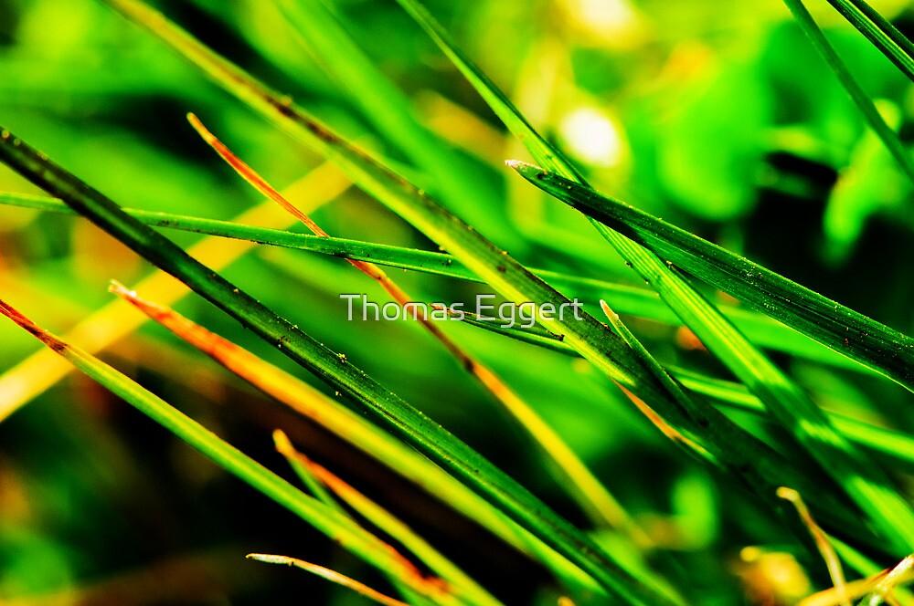 Green by Thomas Eggert