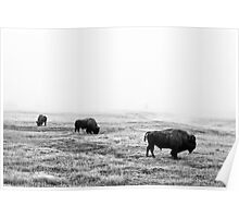 Frosty Bison - Yellowstone National Park Poster