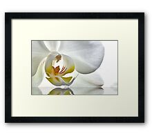 Feeding Love Framed Print