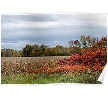 Fall Day In An Ontario Corn Field Poster