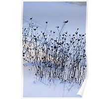 Winter Riverbank Poster