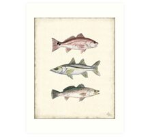 Inshore Slam Watercolor Art Print