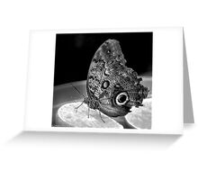 I like citrus fruits. (Butterfly) Greeting Card