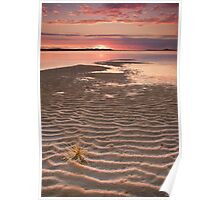 Tumbleweed on the Snowy River Estuary Poster