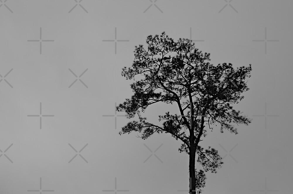 I Walk Alone by Scott Mitchell
