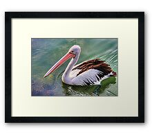 Pelican circle Framed Print
