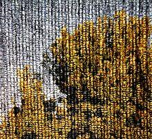 carpet wood by Maarken Edwards