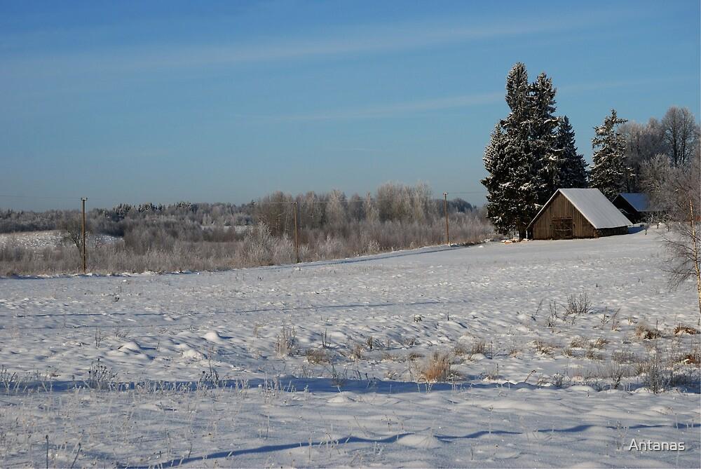 Winter 2013 by Antanas