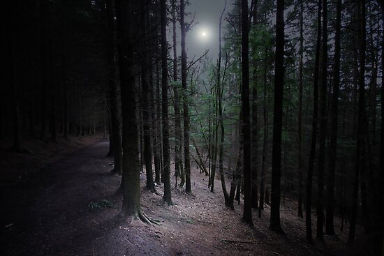 THE MOONLIGHT FOREST  by leonie7
