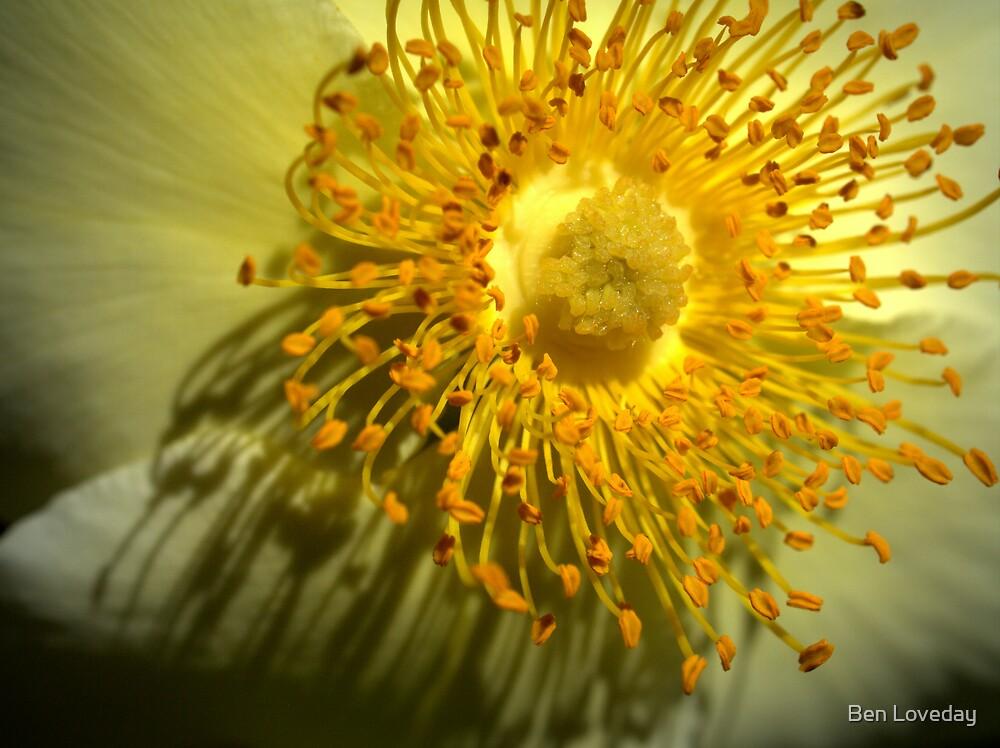 Sun Dance by Ben Loveday