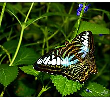 The Beauty of Nature. Photographic Print