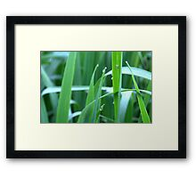 Drops and Life Framed Print