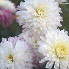 Flower and Flower by gaurav0410
