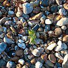 See weed Pebbly Seaweed by Flossy13
