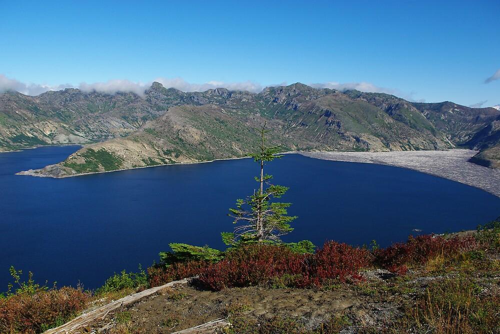 Lonely tree above Spirit Lake, Washington by Claudio Del Luongo