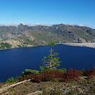 Lonely tree above Spirit Lake, Washington by Claudio Del Luongo